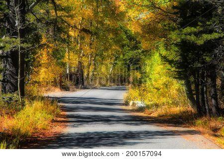 Autumn trail in Sierra Nevada mountains California