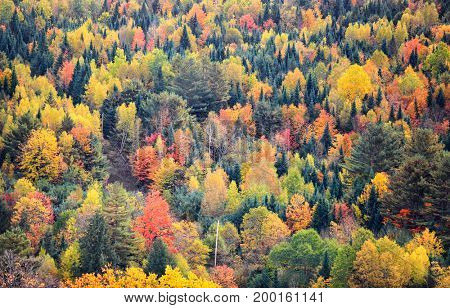 Canopy of Autumn trees in Rural Vermont