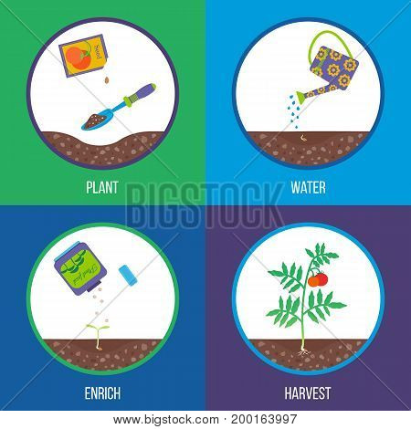 Different stages of a plant growth. Gardening process. Vector illustration