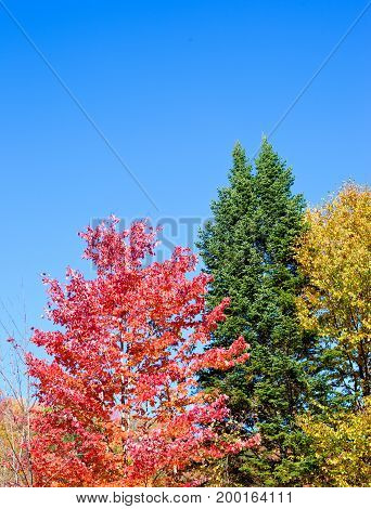 Autumn or fall foliage landscape with season colors