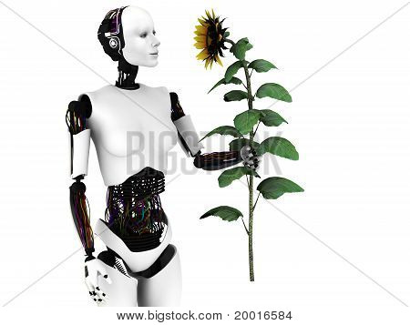 Robot Woman Holding A Sunflower.