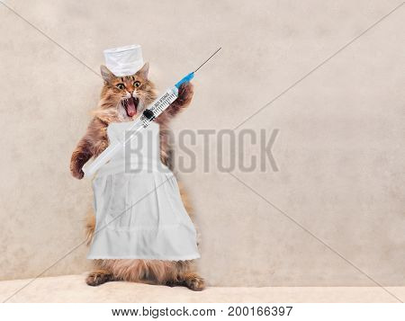 The Big Shaggy Cat Is Very Funny Standing.concept Of Medicine 1