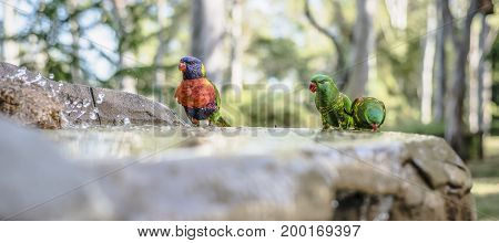Rainbow Lorikeets Outside During The Day.