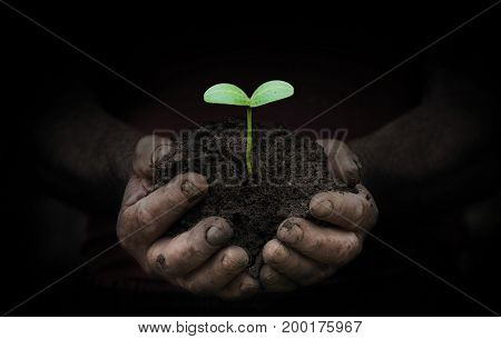 workers hands with a handful of peasant land