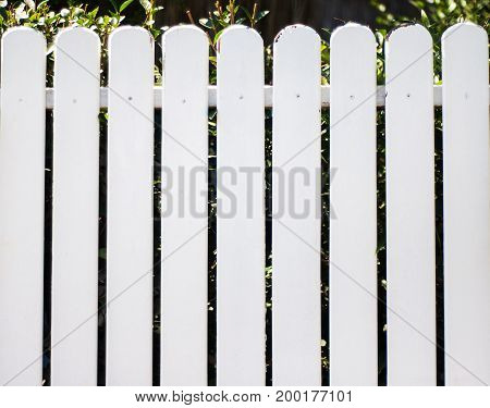 White wooden fence and green plants - natural background