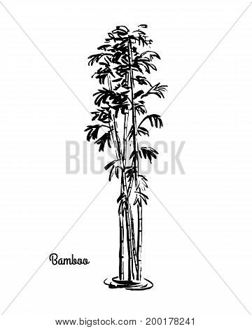 Vector sketch illustration of Bamboo. Black silhouette of isolated on white background.