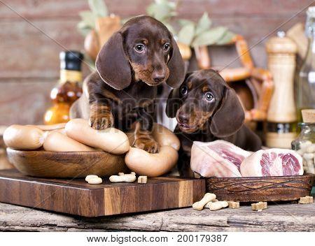Dachshund and dog food