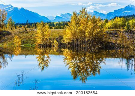 The mirror surface of artificial Abraham lake reflects light cirrus clouds and trees. Sunny autumn day in the Rocky Mountains of Canada. The concept of ecological and active tourism
