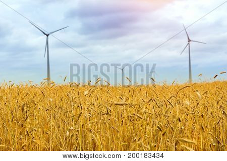 Wind turbine among golden ears of grain crops. Harvesting ears of rye. Gathered crops on field of agricultural farm. Windmill turbine is environmentally friendly source of energy. Lithuania Baltic