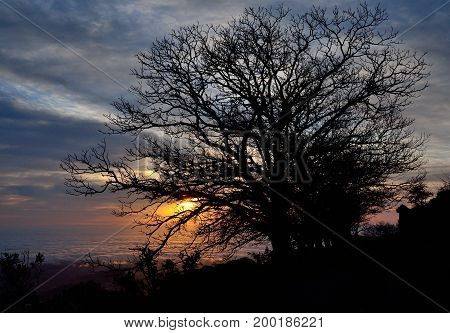 Silhouettes of trees at sunrise with intense cloudy sky background, early spring