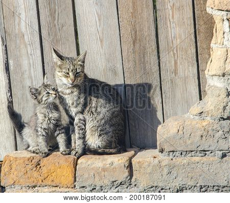 cat with a kitten basking in the sun on a brick wall background