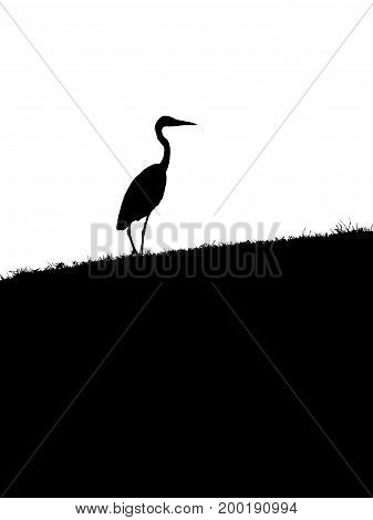 black and white heron alone in the park