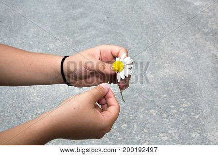 Woman guesses on a chamomile flower for love
