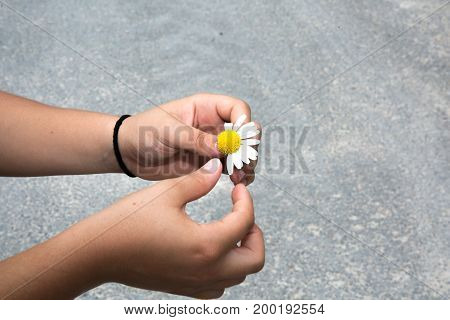 woman guesses on a chamomile on nature in summer. The girl tears off the petals of daisy