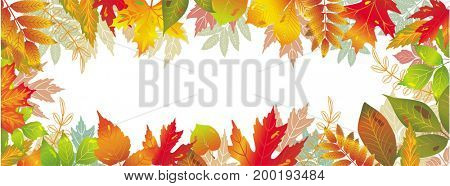Seasonal banners of autumnal leaves. Raster version