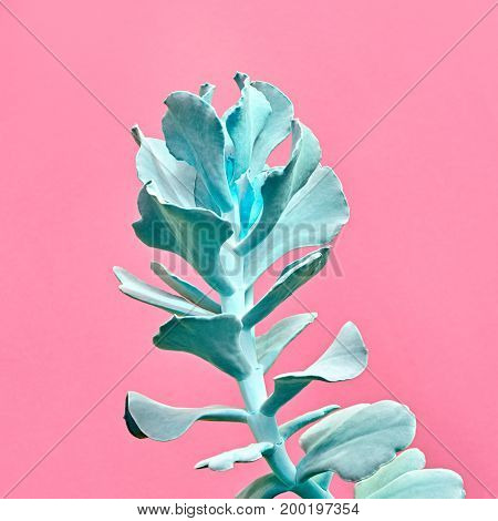 Aloe. Art Gallery Fashion Design. Minimal. Blue aloe. Trendy Pastel Colors. Creative Style. Fashion Concept on Pink background. Detail
