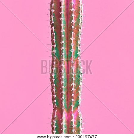 Cactus. Fashion Color. Art gallery Design. Minimal Stillife. Pink Green Cactus Mood, Surrealism. Creative on Pink background. Pop art