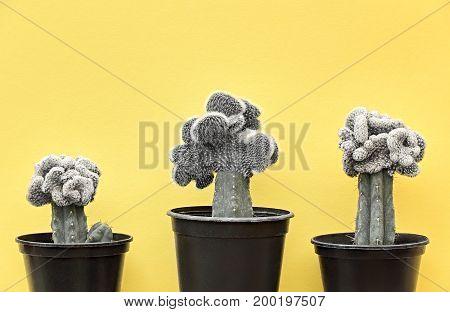 Cactus Fashion Design Set. Minimal fashion Stillife. Trendy Bright Colors. Creative Black and white Style. Cactus Mood on Yellow background