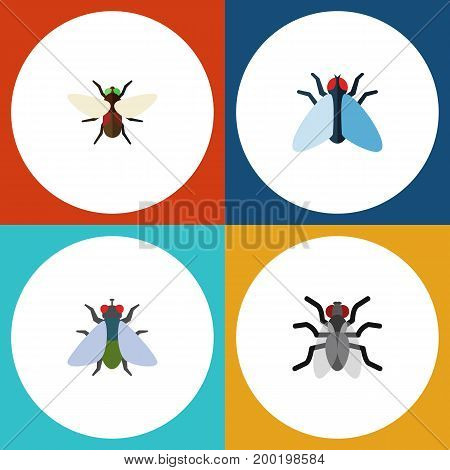 Flat Icon Buzz Set Of Housefly, Gnat, Bluebottle And Other Vector Objects