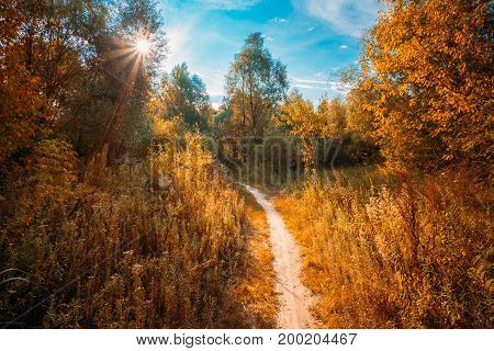 Road, Path, Way, Lane, Pathway In Beautiful Autumn Forest. Sun Shining Through Canopy Of Trees Woods. Sunlight In Deciduous Forest, Autumn Nature