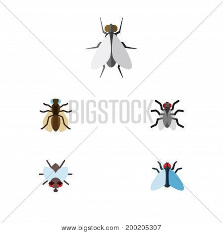 Flat Icon Buzz Set Of Hum, Gnat, Mosquito And Other Vector Objects
