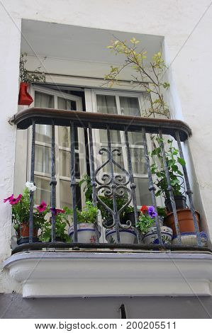 Summer balcony with plants. Spenish street, Andalucia.