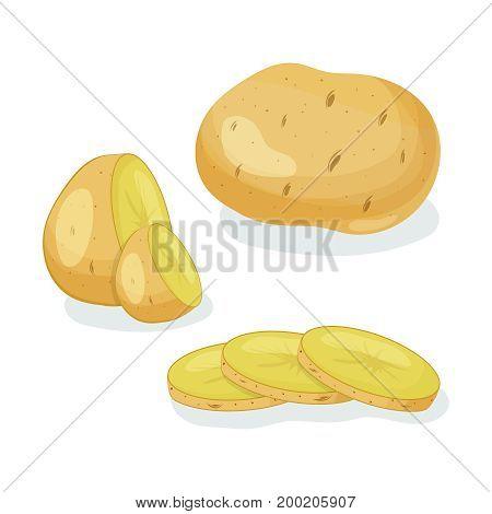 Potatoes vector illustration isolated on white background