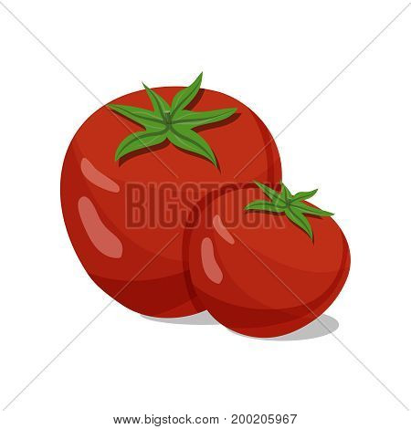 Tomatoes isolated on white background. Tomatoes vector illustration