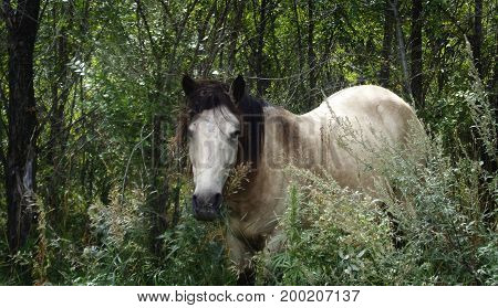 White horse. The white horse on a background of green foliage. Horse. Horse background.