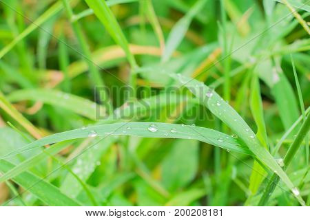 Close up water drop on leaf small green background select focus with shallow depth of field with copy space add text