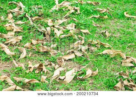 dry leaf on floor grass background with copy space add text