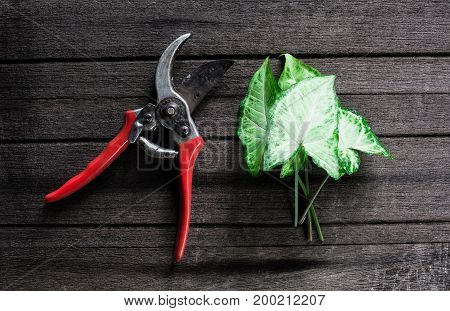 Pruning shears and branch on woodenCutting deviceCutting equipment