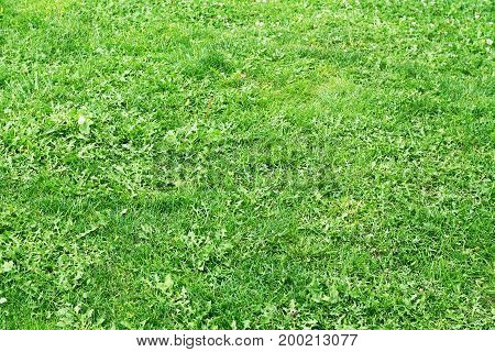 Green grass background texture with grunge lighting and lots of copy space