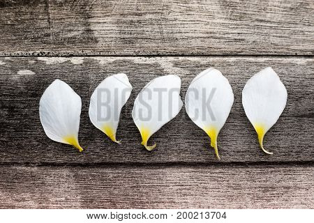 White flower petals on woodenPetals of plumeria