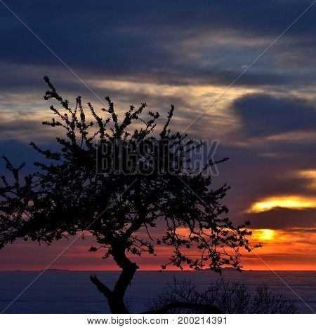 Awesome sunrise, backlit tree in foreground and colorful sky background