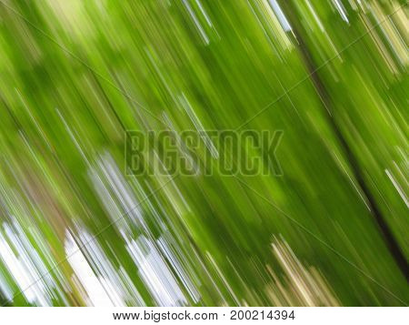 The leaves of green plants are photographed in motion. Abstraction.