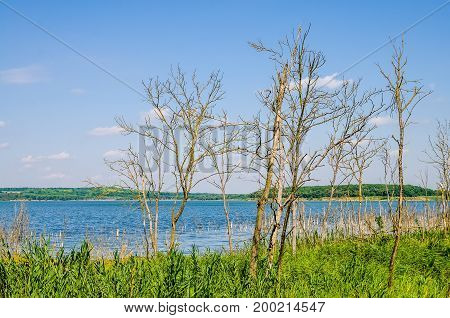 Beautiful landscape with several dry trees and a river