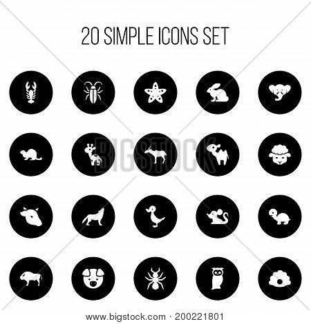 Set Of 20 Editable Zoology Icons. Includes Symbols Such As Giraffe, Sheep, Wolf And More