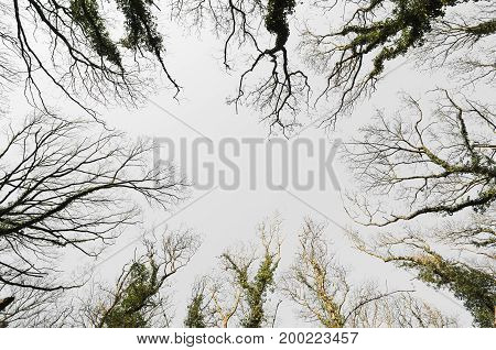 Treetop from Below on a Spring Day