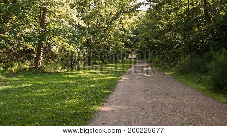 A dirt walking path in the woods with a small meadow to the left