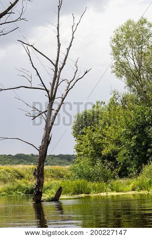 Lonely Dry Tree Against The Blue Sky And River