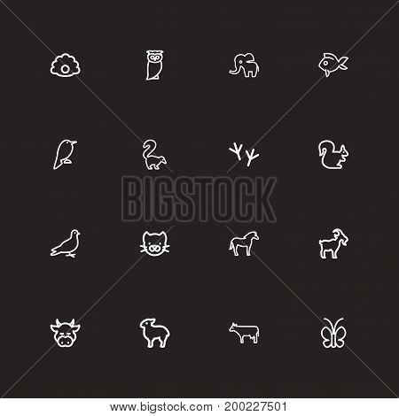Set Of 16 Editable Zoology Outline Icons. Includes Symbols Such As Bird Trace, Bun, Bird And More