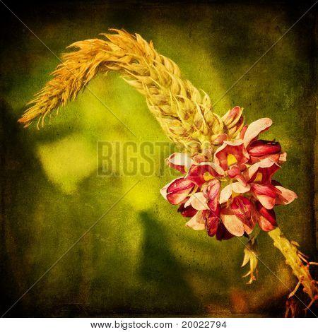 Kudzu flower with textured background