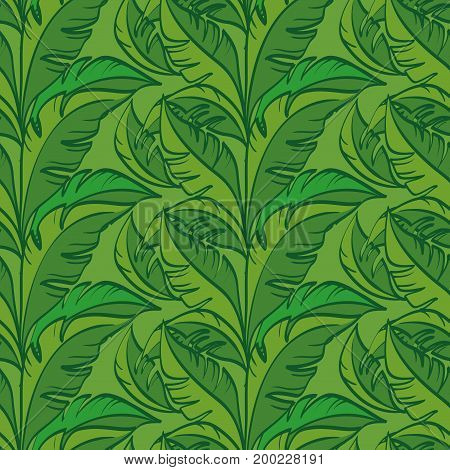 Seamless Floral Pattern, Leaves Exotic Plants, Contours on Tile Green Background. Vector