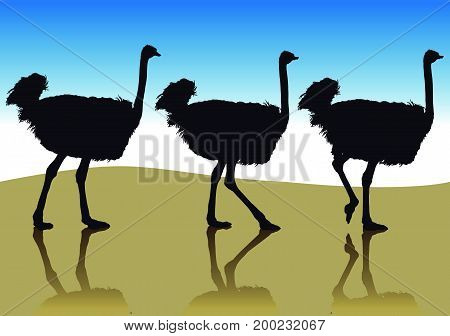 Several ostrich silhouettes in going to the side in profile