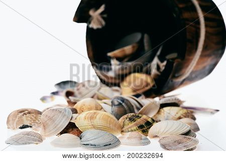 Bucket With Sea Shell Isolated