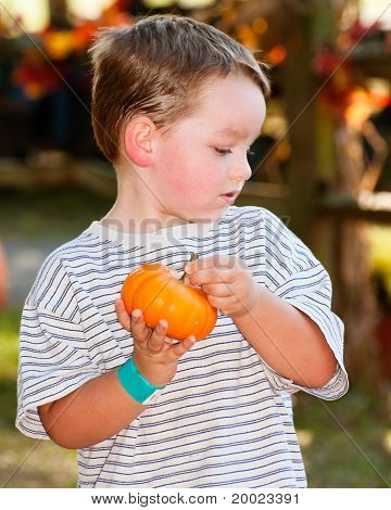 Young boy picks pumpkin at farm.