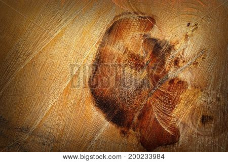 detail of heart wood on felled log beautiful natural wooden texture