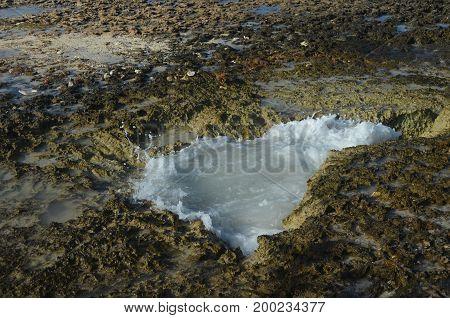 Tidal pool found amongst the lava rocks in Aruba.