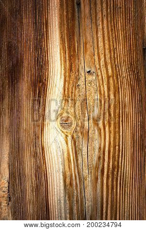 vertical spruce wood texture ready for your design